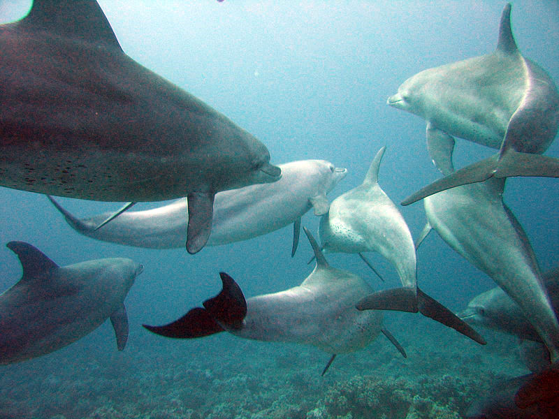 Dolphins can hold a conversation with each other