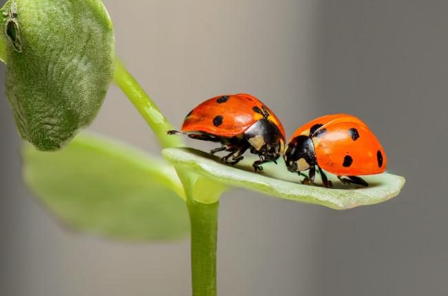 Ladybirds facing catastrophic decline in numbers